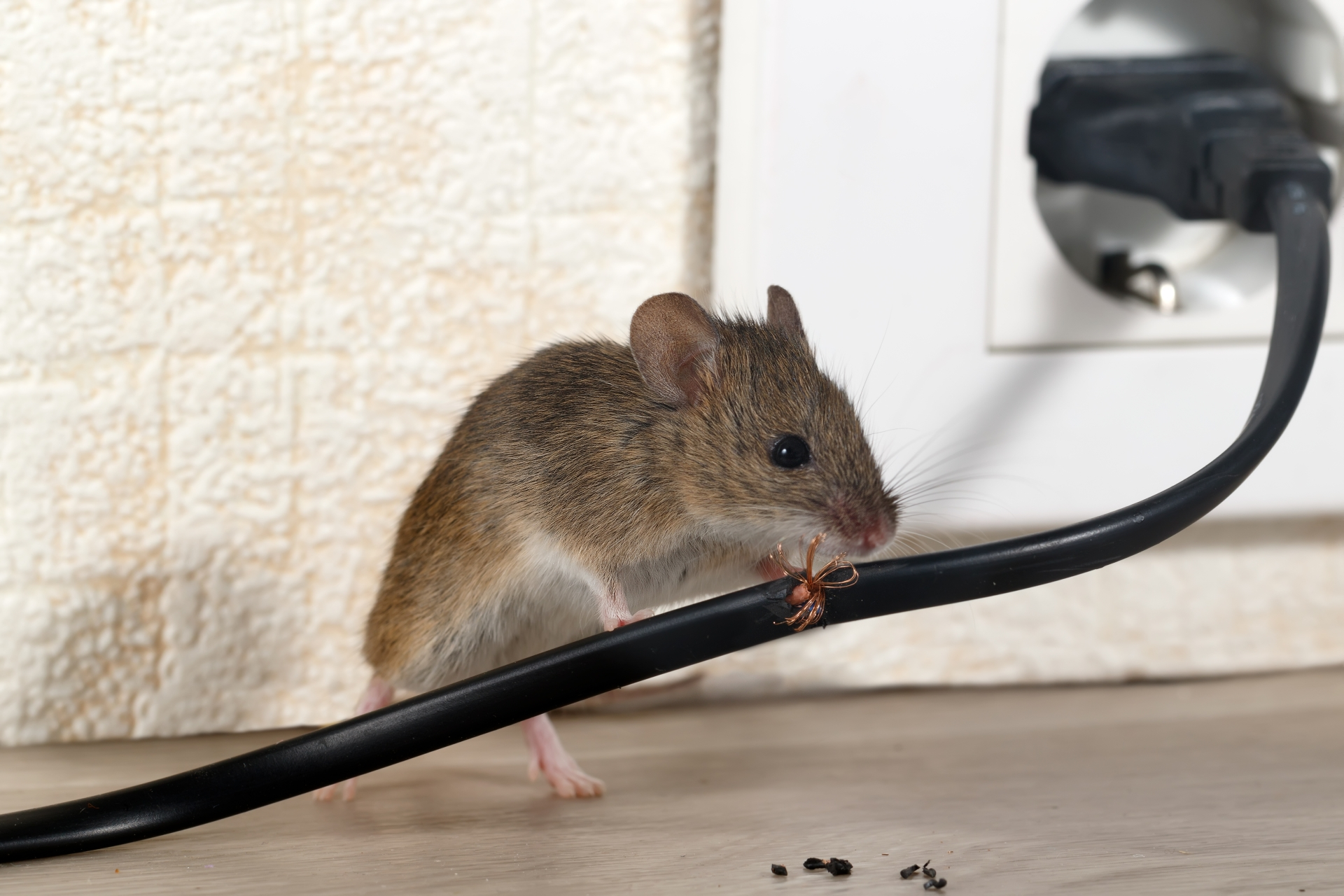 Mice Infestation, Pest Control in Olympic Park, E20. Call Now 020 8166 9746